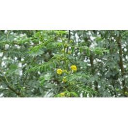 Babul Leaves 100g